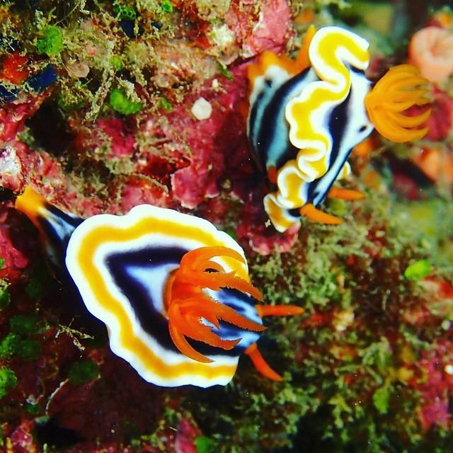 海蛞蝓兄弟