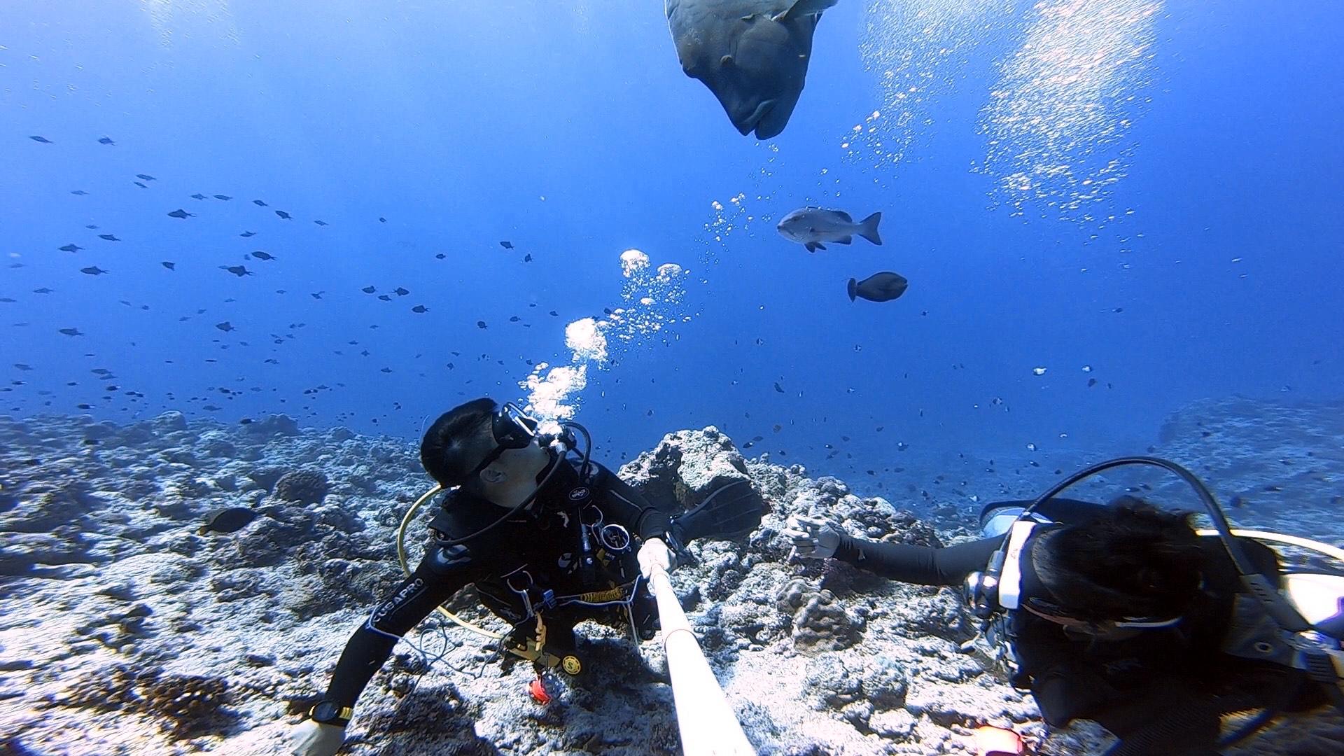 UnderWater   Photographer in Hawaii   Michele Coelho