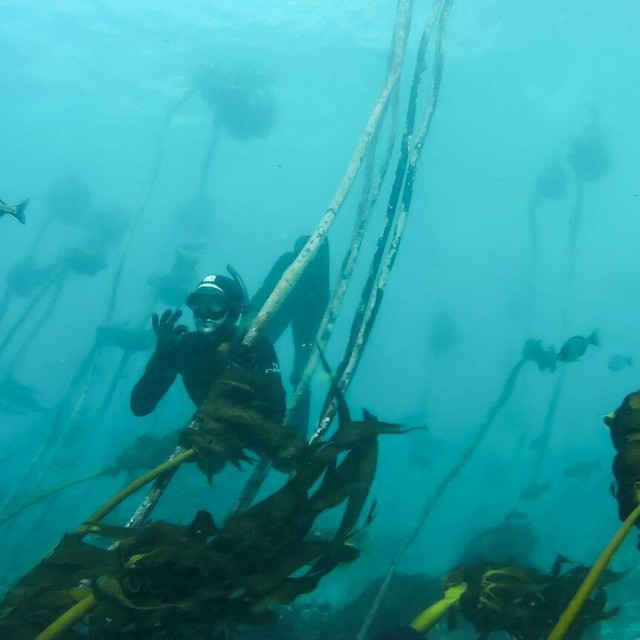 amazing time in the kelp forests today.. photo by Heidi Hawkins.