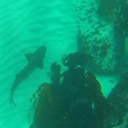 Vaughn  Dicksons photo of me chatting to a Pyjama shark