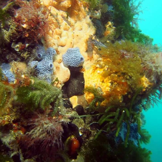 sponges and tunicates
