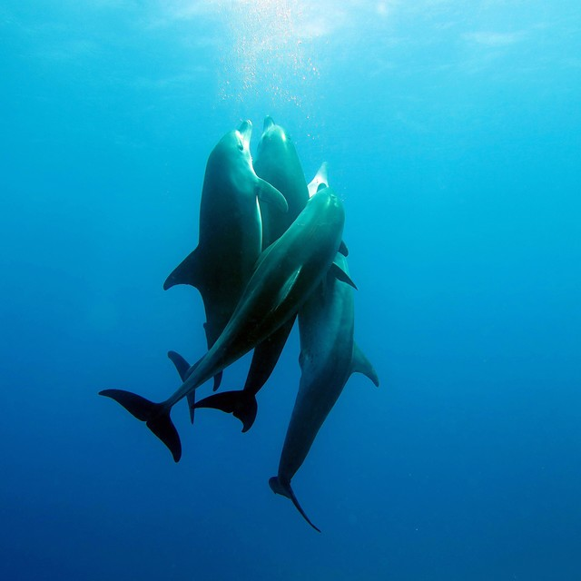 Diving with Dolphin