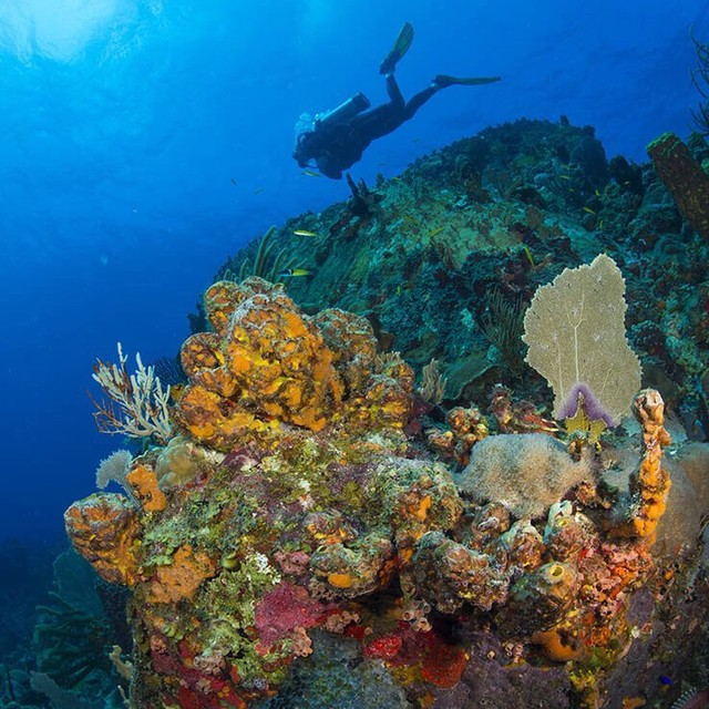 Marcus Whitman diving the pinnacle at French Cap cay, USVI