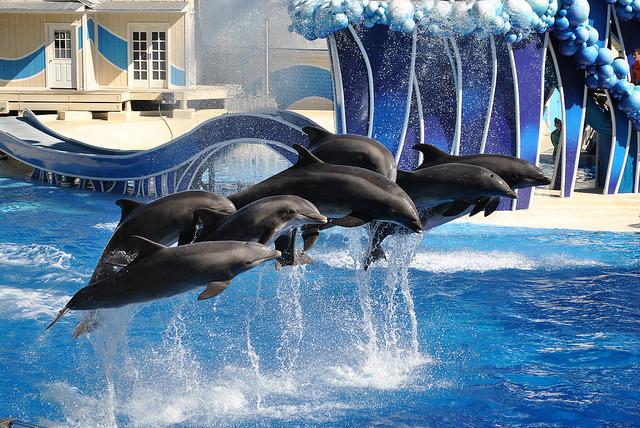 Dolphins_-_SeaWorld_Orlando_(15240300294).jpg