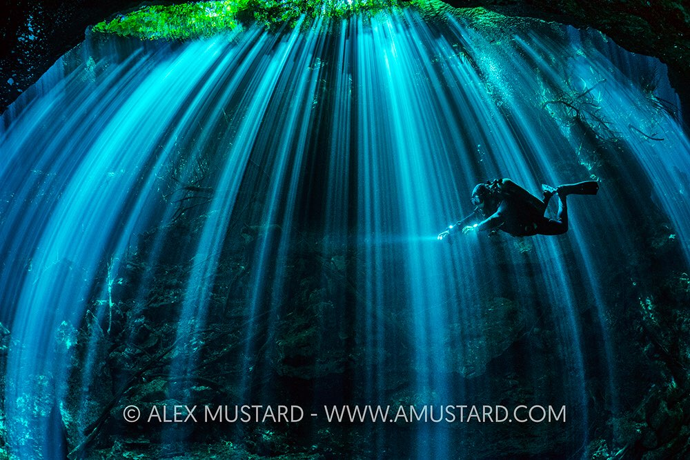 Mustard_Cenote_Light.jpg