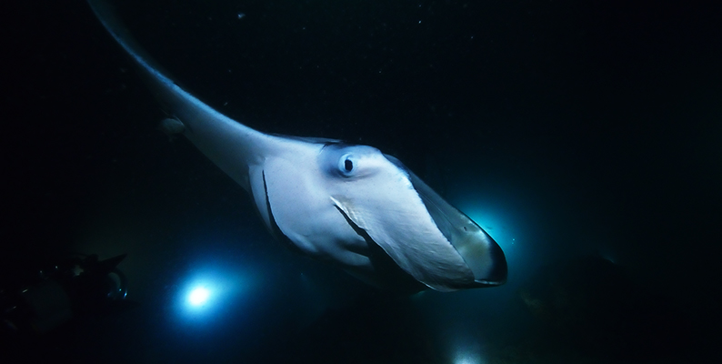Manta-Night-Dive.jpg