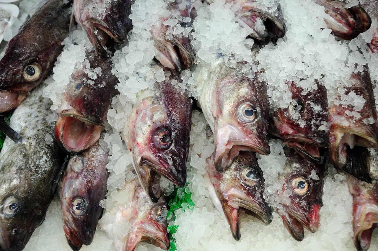 fish-1850166_1280.jpg