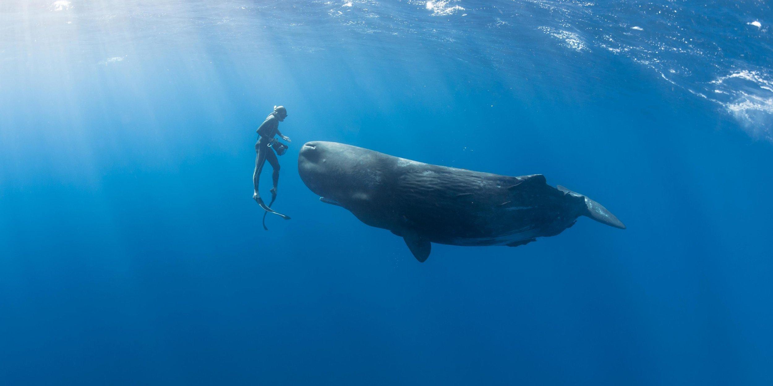 zanzibar sperm whale.jpg