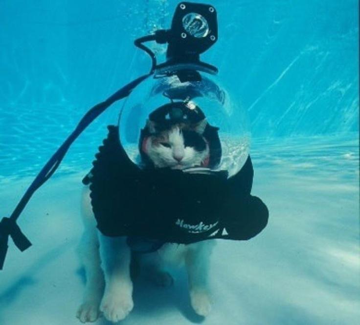 a2285c363a791bc50437bdca24f08e9a--funny-cats-funny-animals.jpg