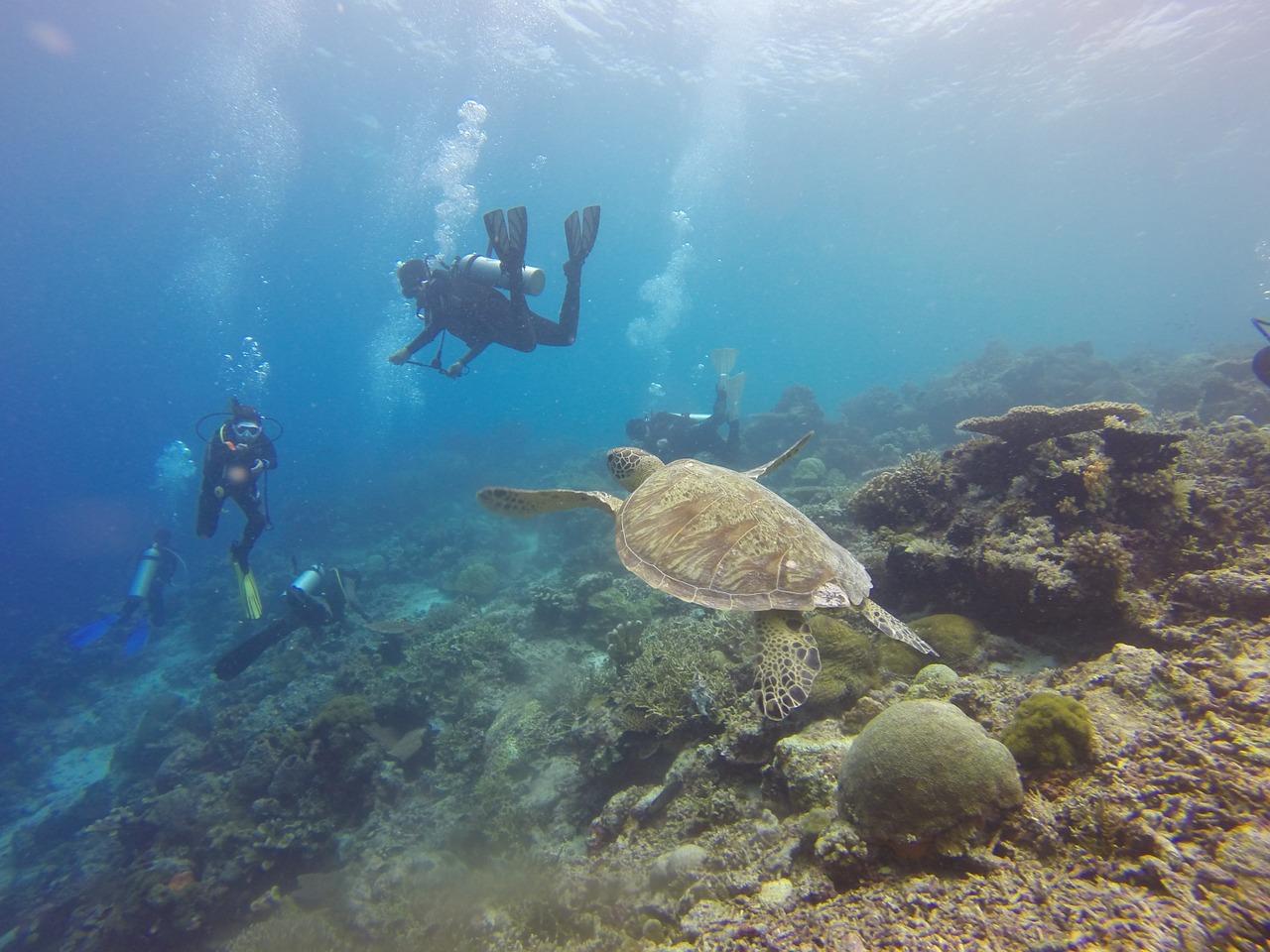 scuba-diving-1300852_1280.jpg