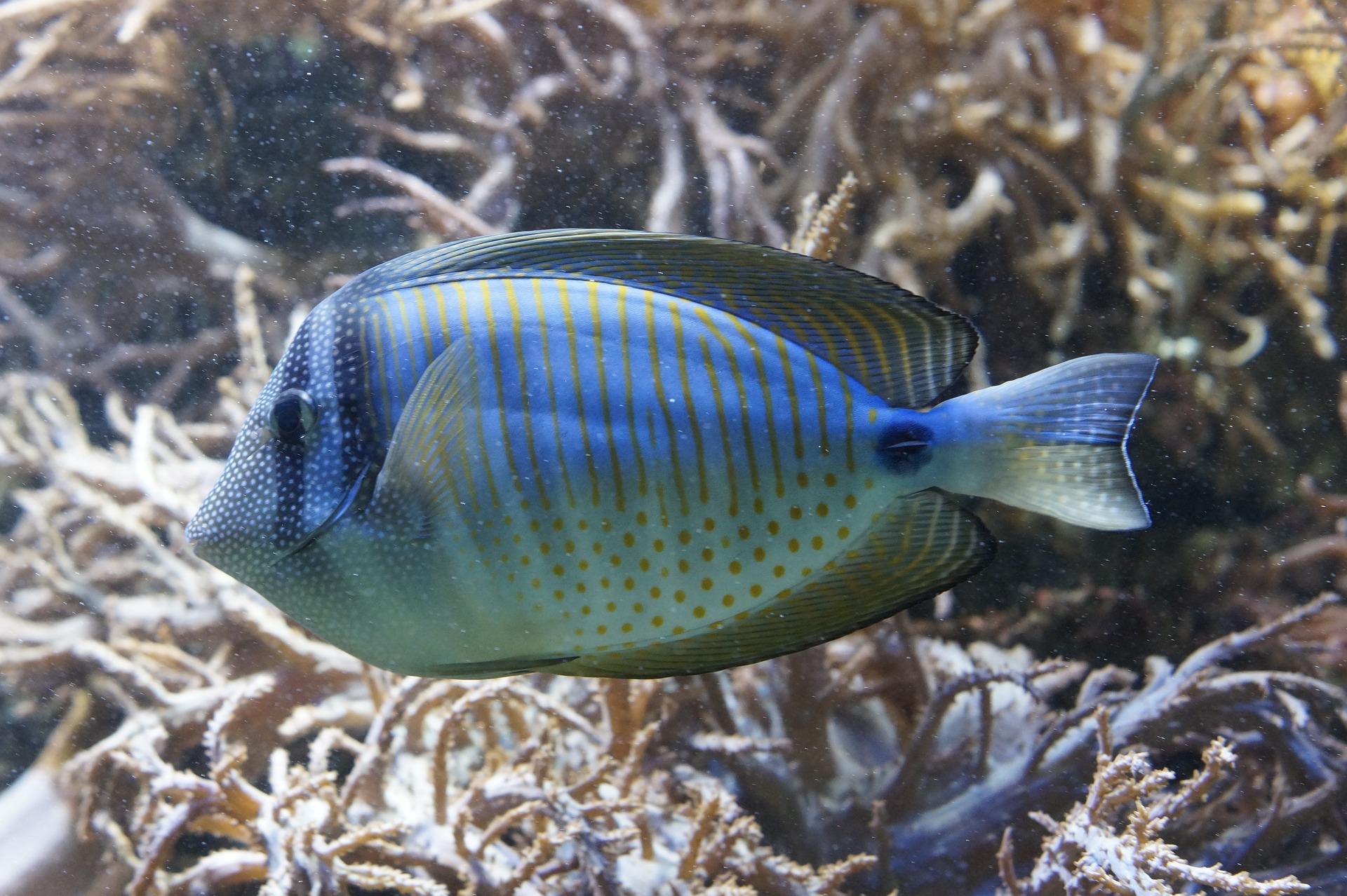 fish-793375_1920.jpg