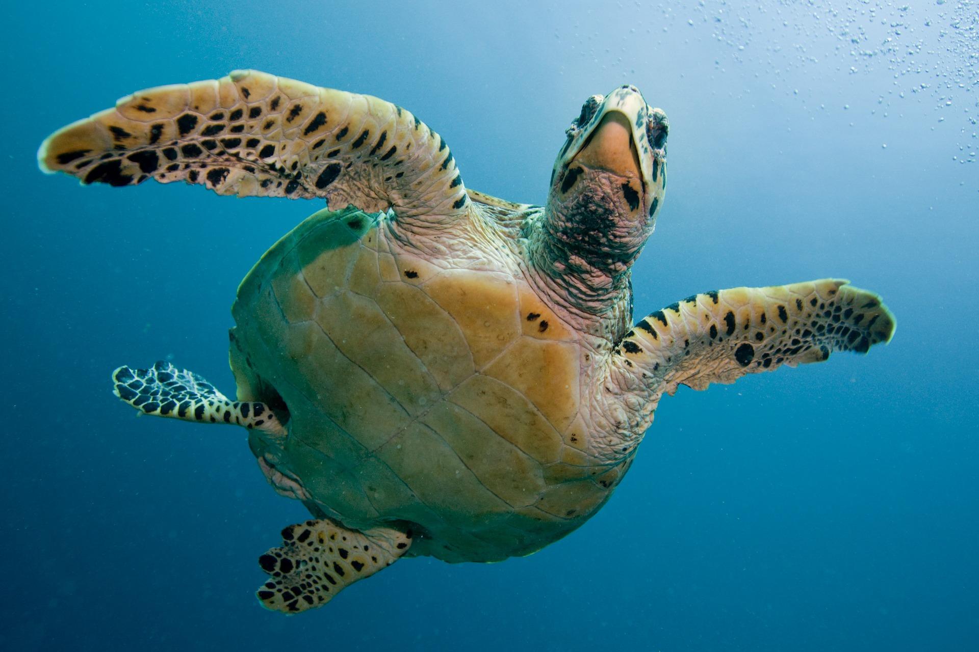 turtle-2250720_1920.jpg