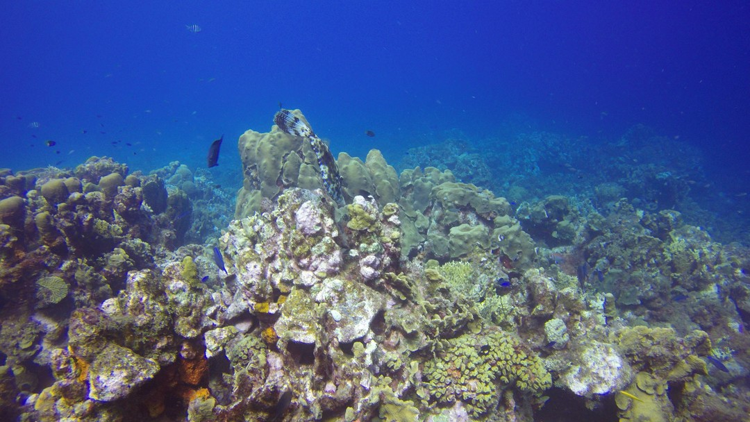 curacao-corals-diving