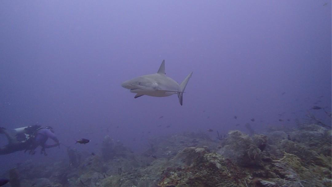 andros-shark