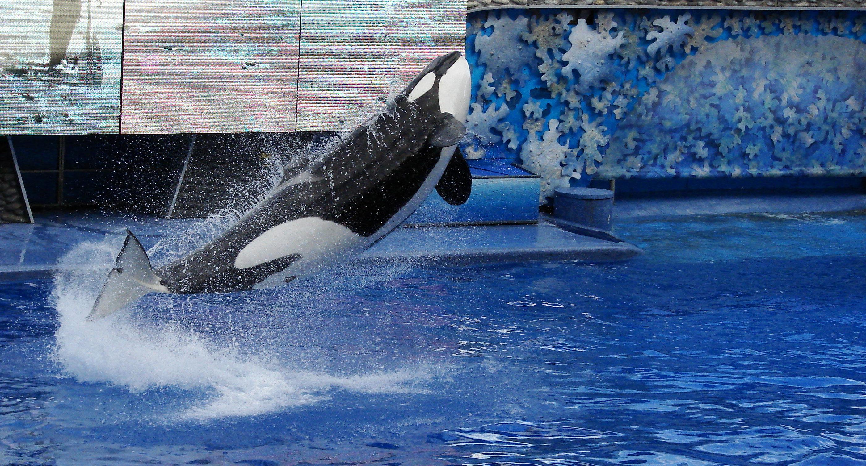 Seaworld-Orlando-Shamu-.jpg