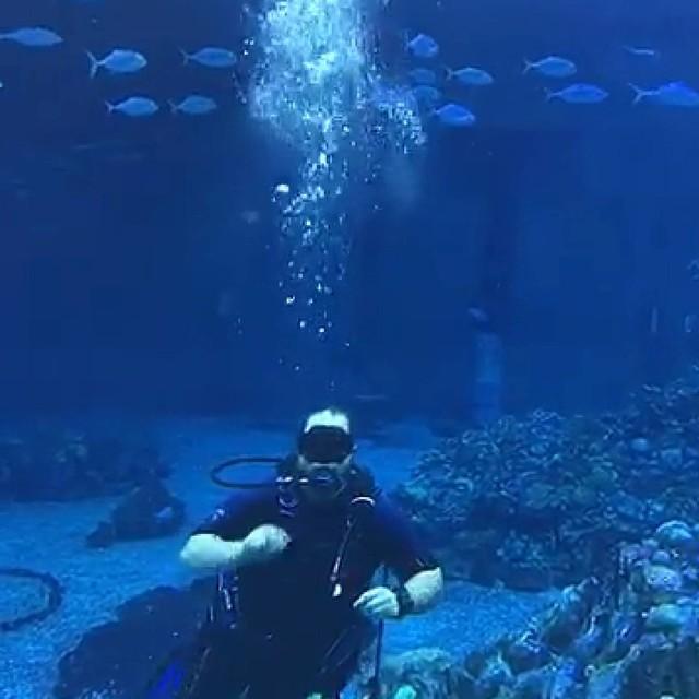 Dive Quest at Disney's Epcot