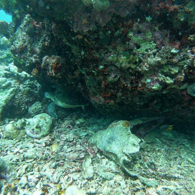 在磨背的海龜
