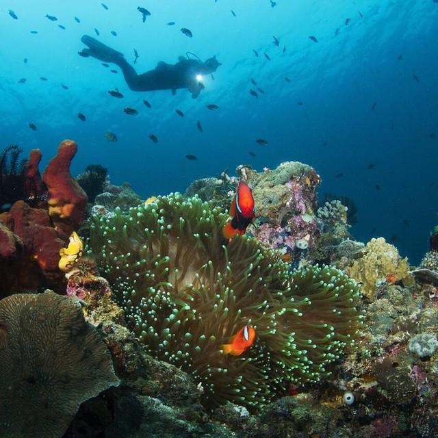 필리핀 바다에서 아네모네 피쉬들 그리고 버디와 함께 촬영했습니다 🐬 💕  -photo by haneuldameun kim
