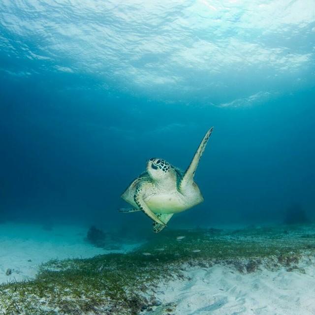 행복했던 보홀섬 바다에서 거북이와의 멋진 만남🐢💕📷  -photo by Haneuldameun Kim