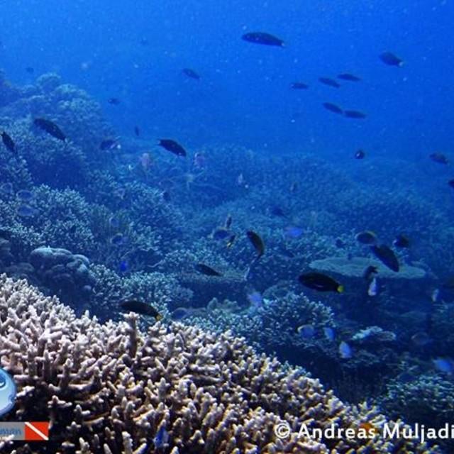 Healty coral living of Karimunjawa National Park.