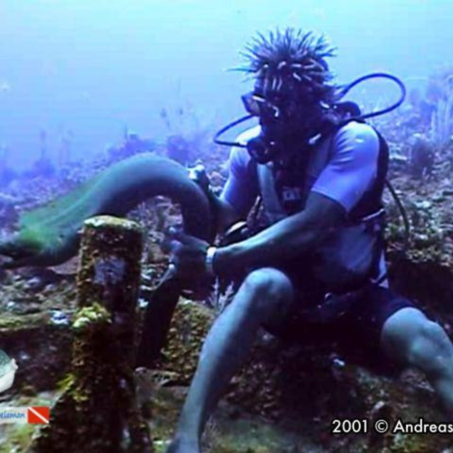 A guide make close approach to a green moray eel
