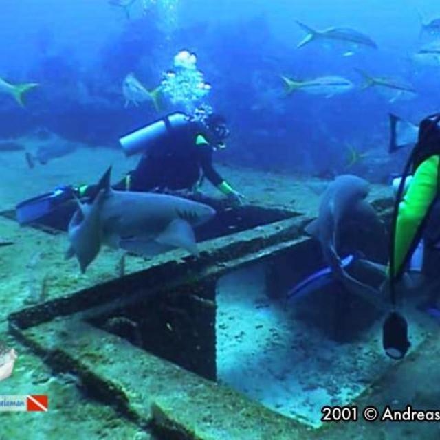 Fish crowd at Amigo's wreck
