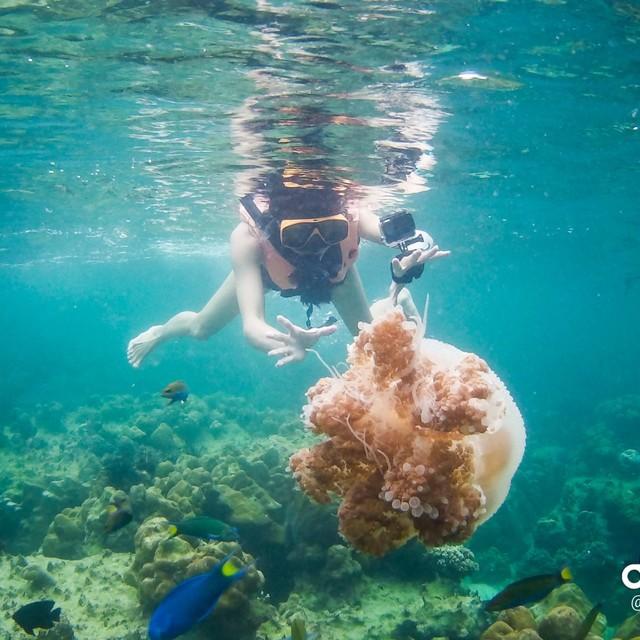 #KohLipe #Satun #Thailand #泰国 #snorkeling #浮潜 #Jellyfish #水母