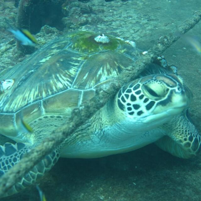 Crush the local turtle